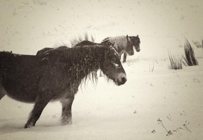 sota la neu